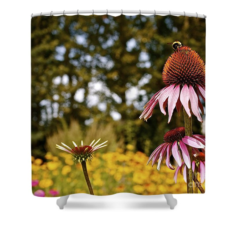 Herb Shower Curtain featuring the photograph Echinacea With Bee by Linda Bianic