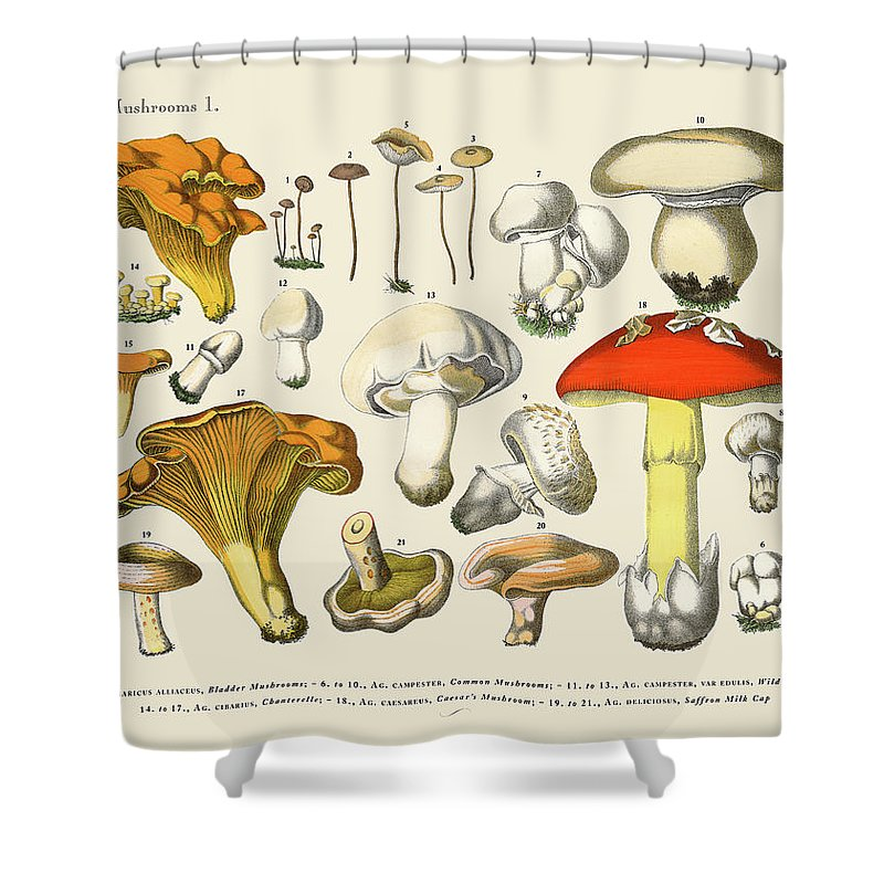 White Background Shower Curtain featuring the digital art Edible Mushrooms, Victorian Botanical by Bauhaus1000
