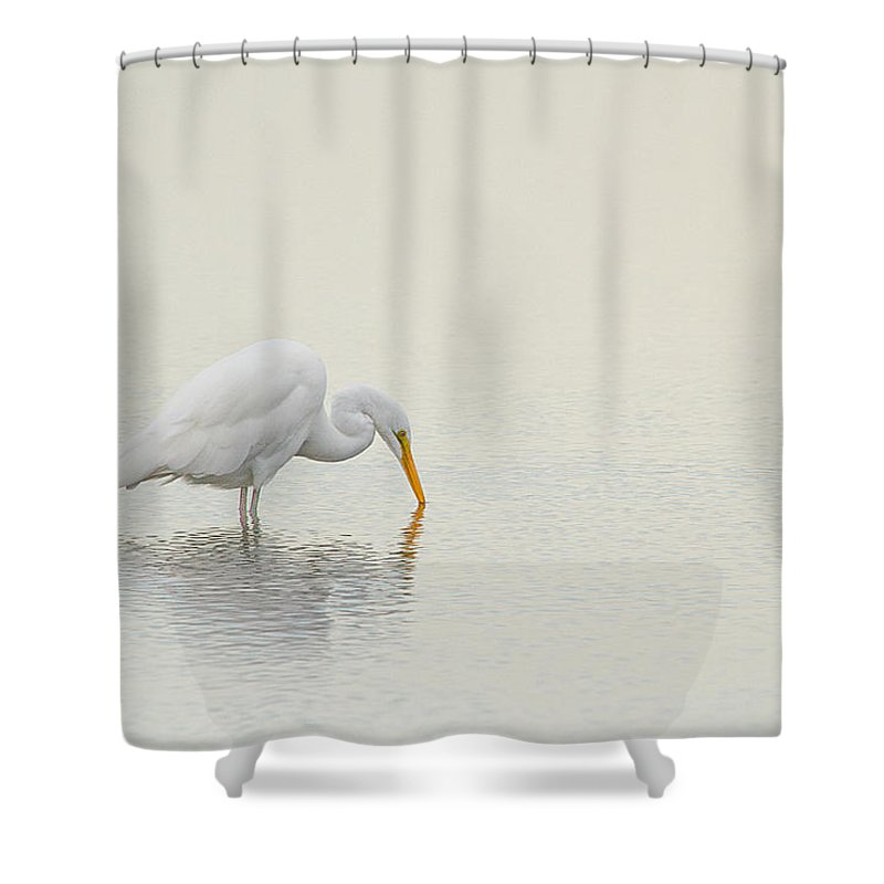 Great Egret Shower Curtain featuring the photograph Egret Finds Himself by Karol Livote