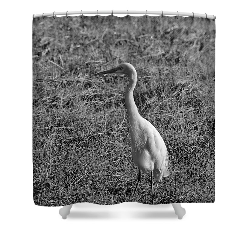 Egret Shower Curtain featuring the photograph Egret In Black And White by Douglas Barnard