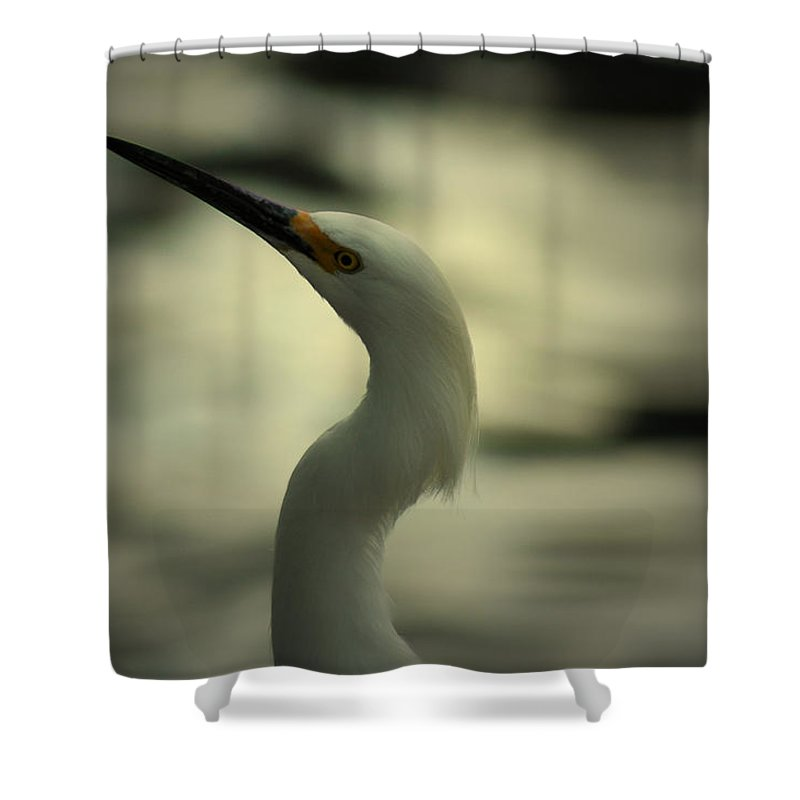 Egret Shower Curtain featuring the photograph Egret Of Sanibel 10 by David Weeks