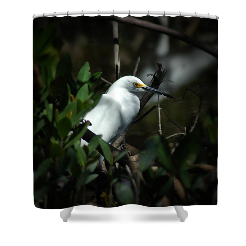 Egret Shower Curtain featuring the photograph Egret Of Sanibel 5 by David Weeks
