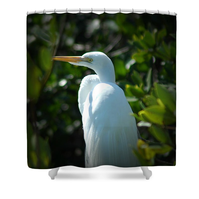 Egret Shower Curtain featuring the photograph Egret Of Sanibel 9 by David Weeks