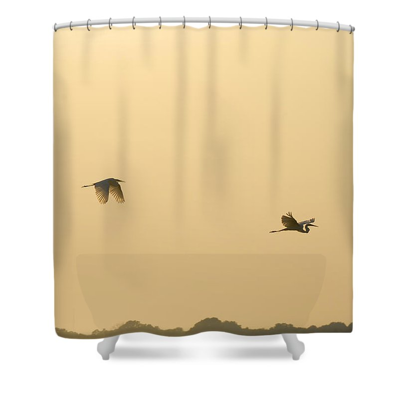 Egret Shower Curtain featuring the photograph Egrets In Flight by Charles Beeler