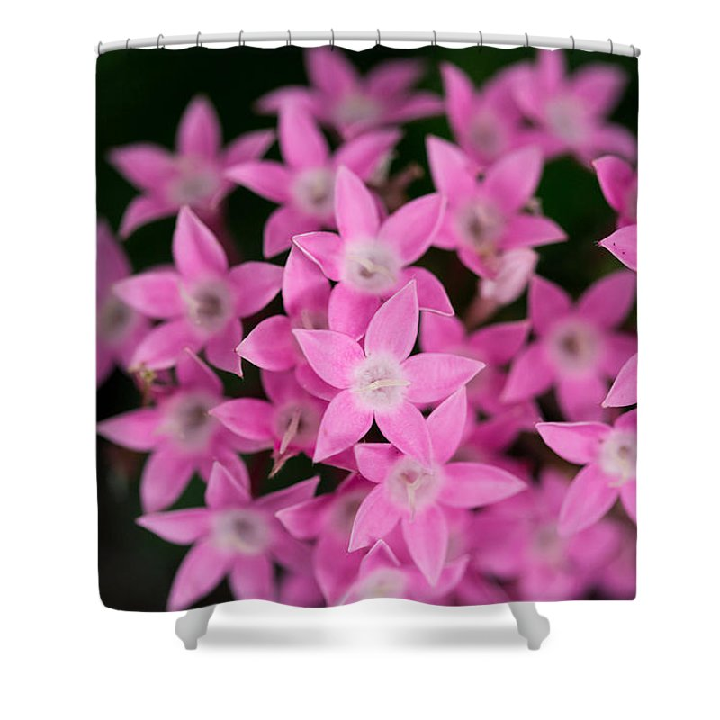 Pink Shower Curtain featuring the photograph Egyptian Star Flowers Or Penta by Eti Reid