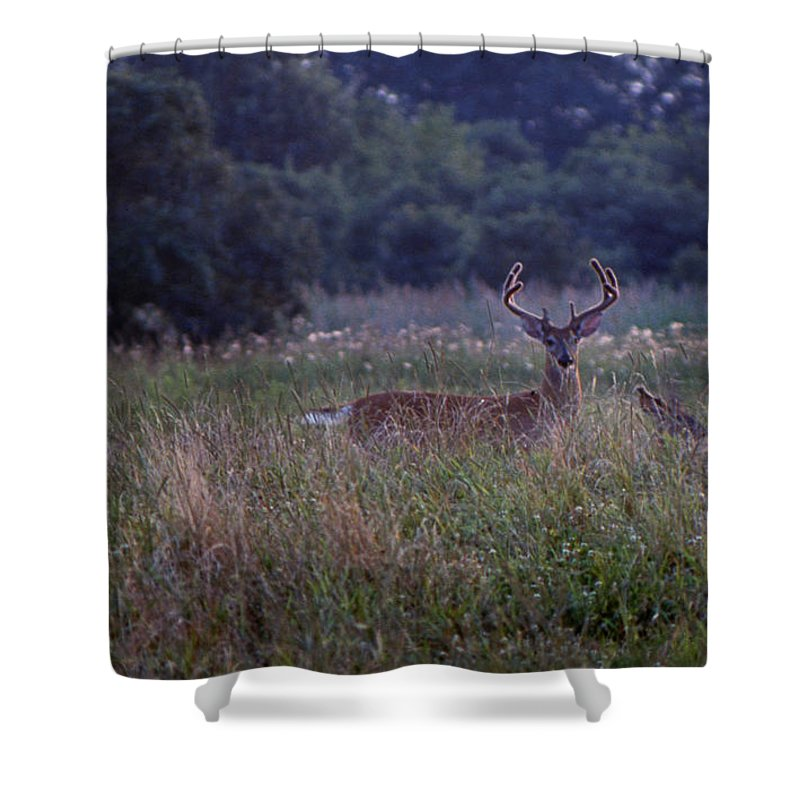 Nature Shower Curtain featuring the photograph Eight Point Velvet by Skip Willits