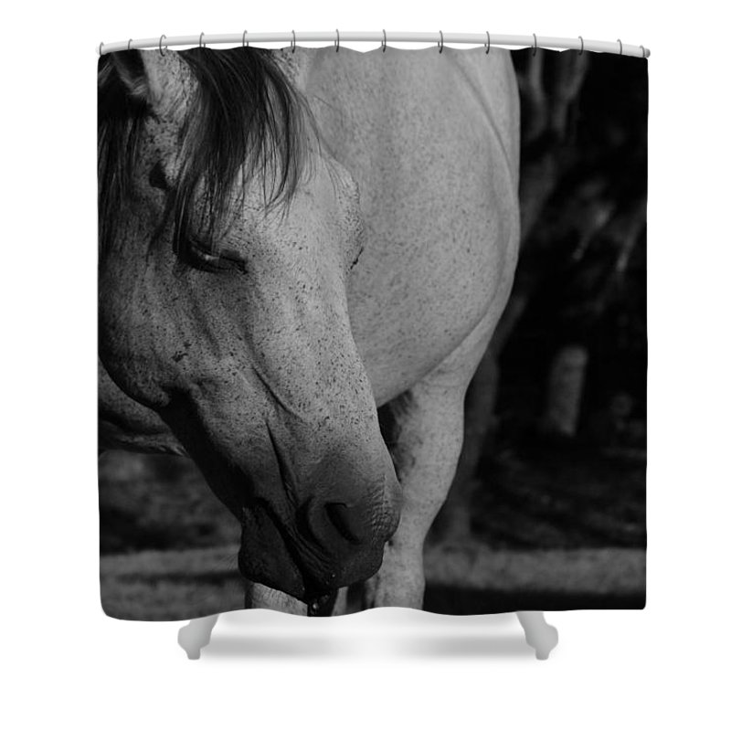 Horse Shower Curtain featuring the photograph Einstein by Ryan Dove