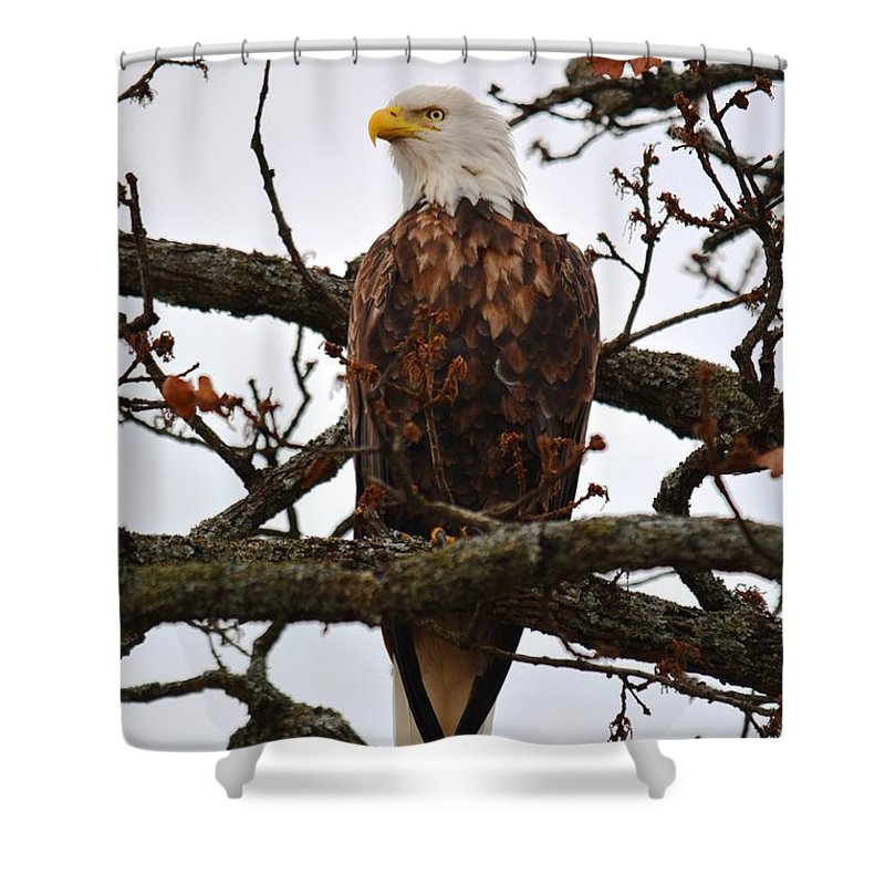 Bald Eagle Shower Curtain featuring the photograph Elegance by Deanna Cagle
