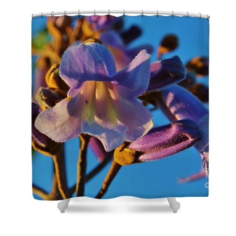 Kerisart Shower Curtain featuring the photograph Elegant Lady by Keri West