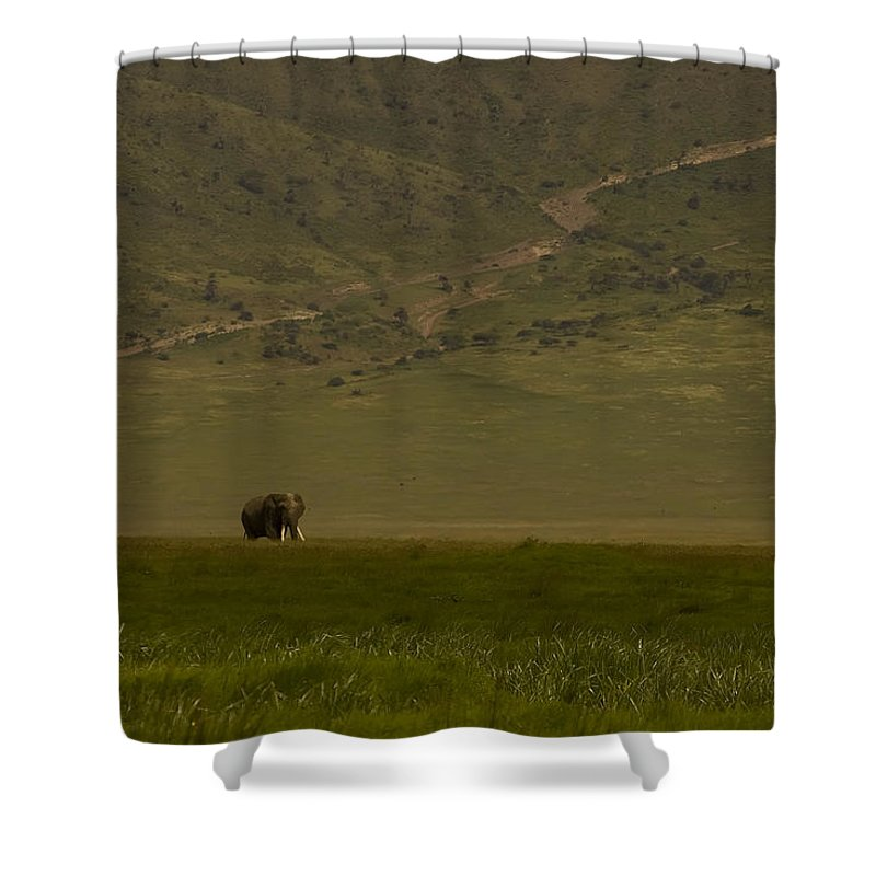 Elephantidae Loxodonta Africana Shower Curtain featuring the photograph Elephant  #0104 by J L Woody Wooden