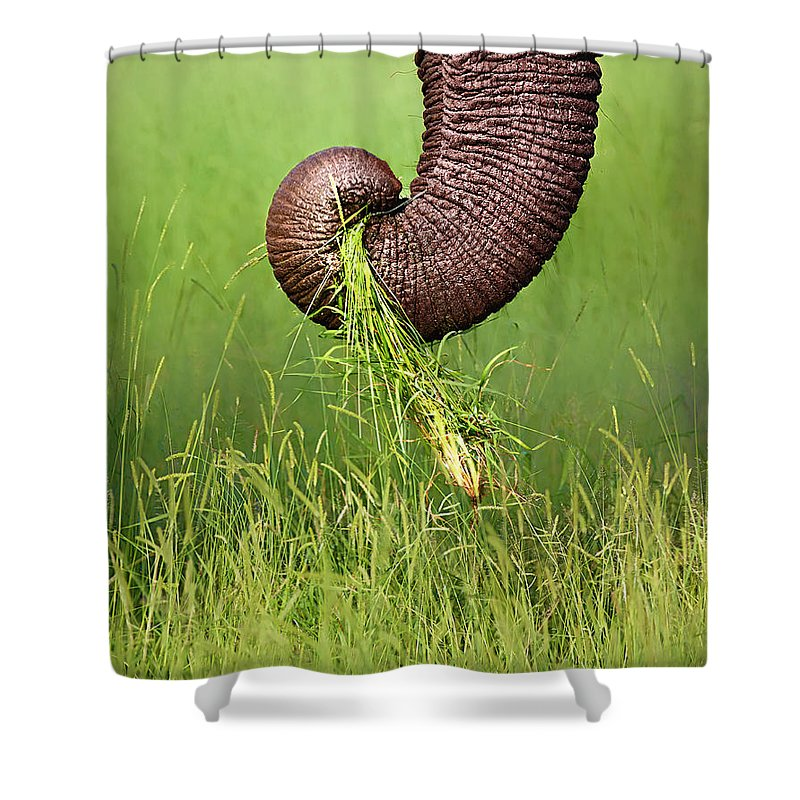 Close-up Shower Curtain featuring the photograph Elephant Trunk Pulling Grass by Johan Swanepoel