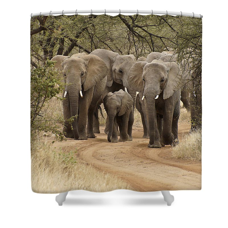 Africa Shower Curtain featuring the photograph Elephants Have the Right of Way by Michele Burgess