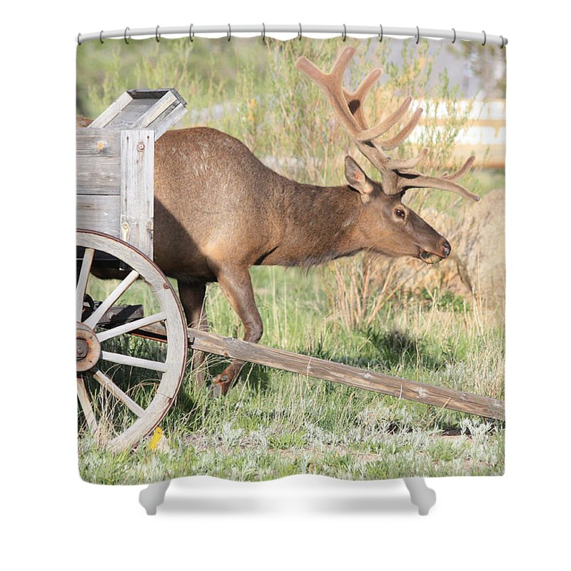 Elk Shower Curtain featuring the photograph Elk Drawn Carriage by Shane Bechler