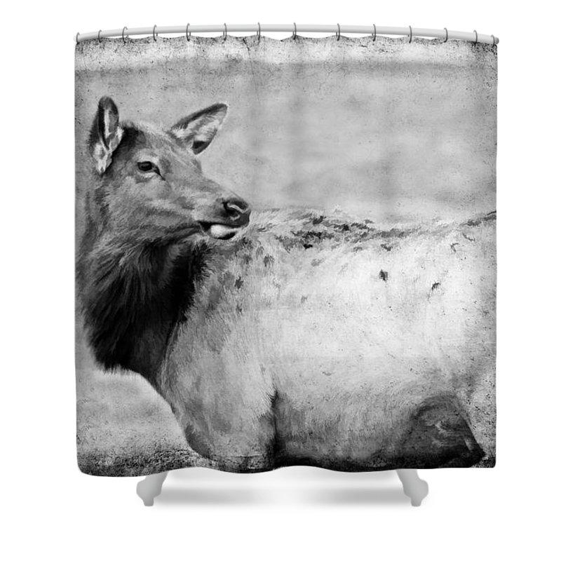 Elk Shower Curtain featuring the photograph Elk IIi by Athena Mckinzie