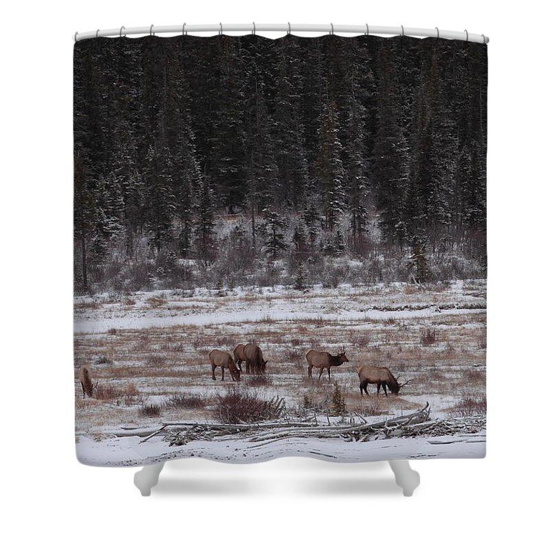 Elk Shower Curtain featuring the photograph Elk Landscape by Bruce J Robinson