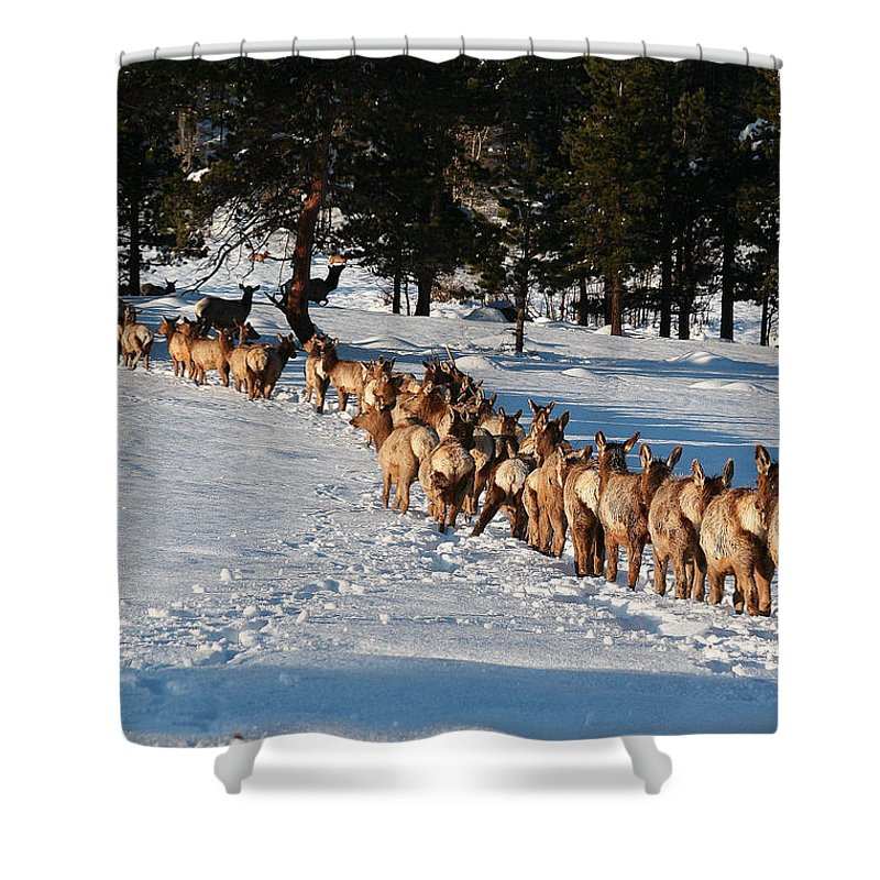 Elk Train Shower Curtain for Sale by Steven Reed