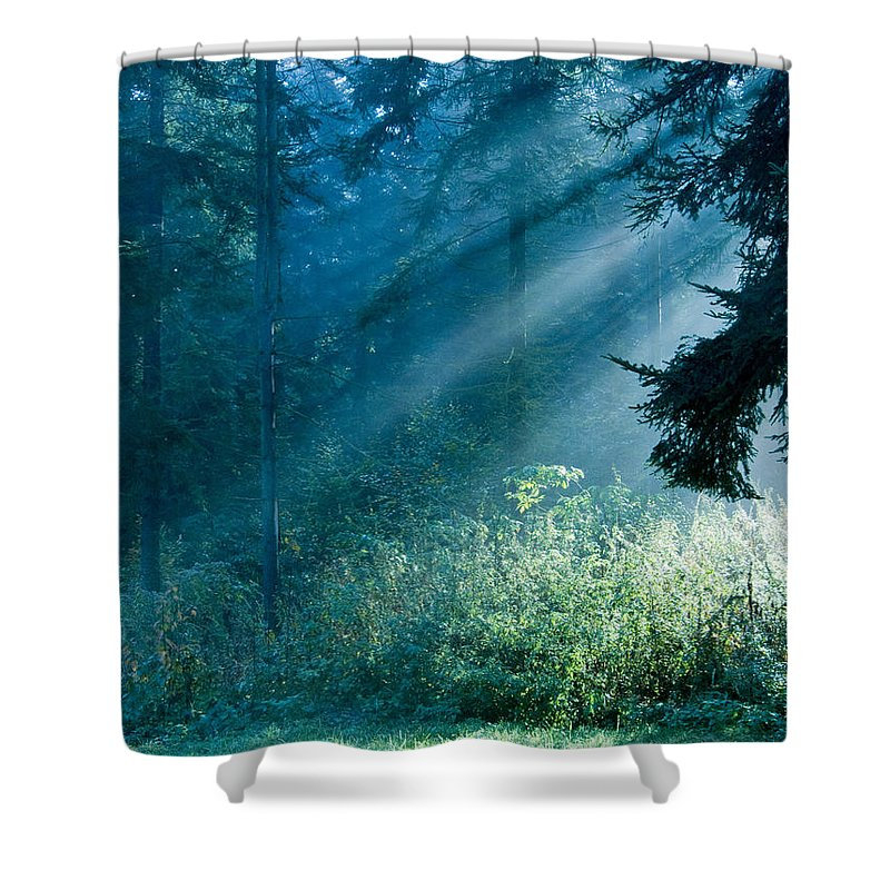 Nature Shower Curtain featuring the photograph Elven Forest by Daniel Csoka