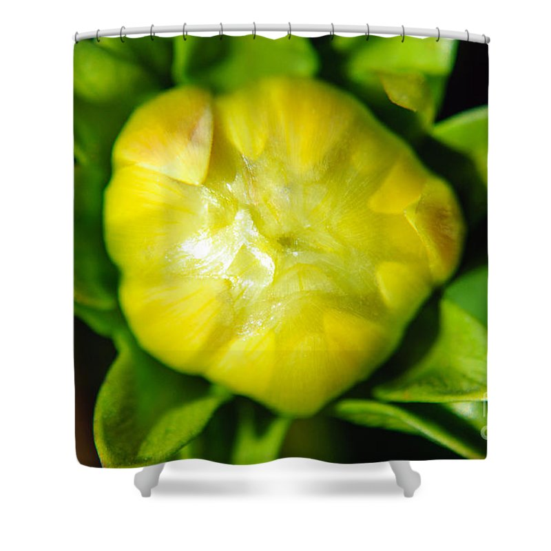 Yellow Dahlia Shower Curtain featuring the photograph Emerging Dahlia Bud by Tikvah's Hope