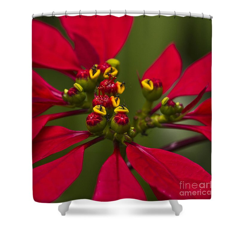 Heiko Shower Curtain featuring the photograph Emmets Home by Heiko Koehrer-Wagner