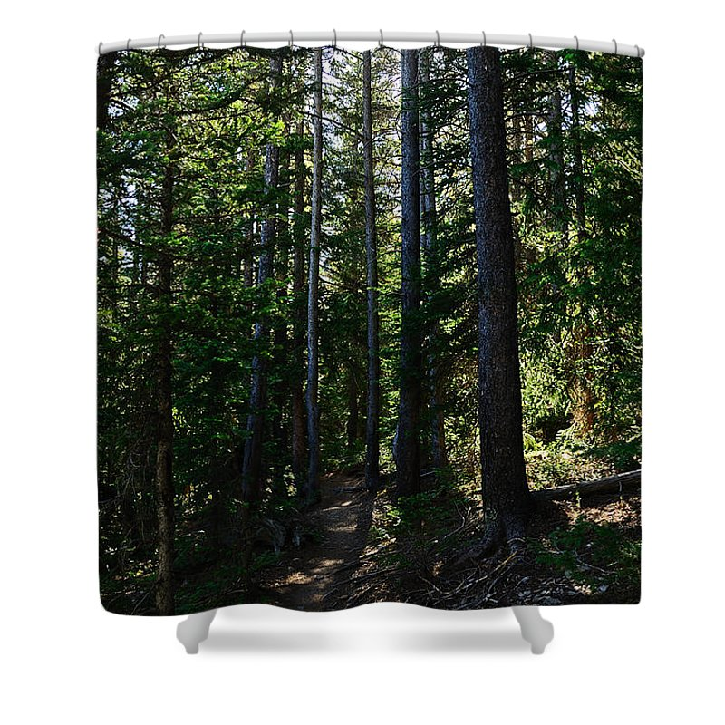 Trail Shower Curtain featuring the photograph Enchanted Trail by Kelly Black