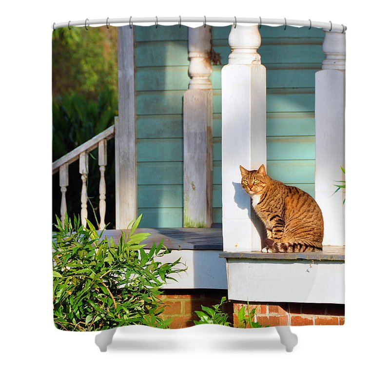 Animals Shower Curtain featuring the photograph Enjoy The Sun by Jan Amiss Photography