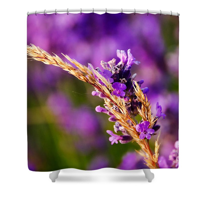 Lavender Shower Curtain featuring the photograph Entangled by Susie Peek