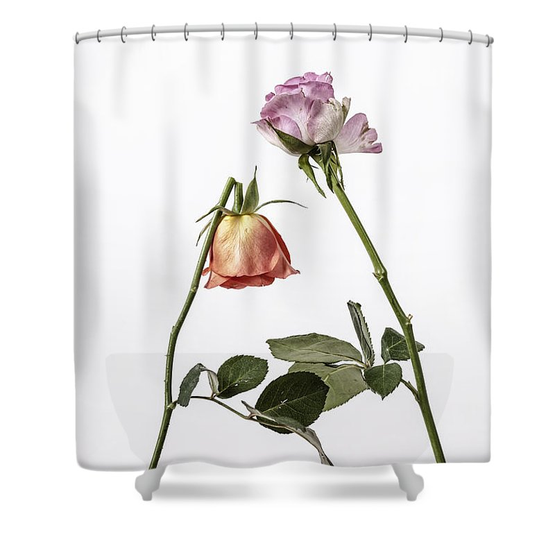 Rose Shower Curtain featuring the photograph Ephemeral by Joana Kruse