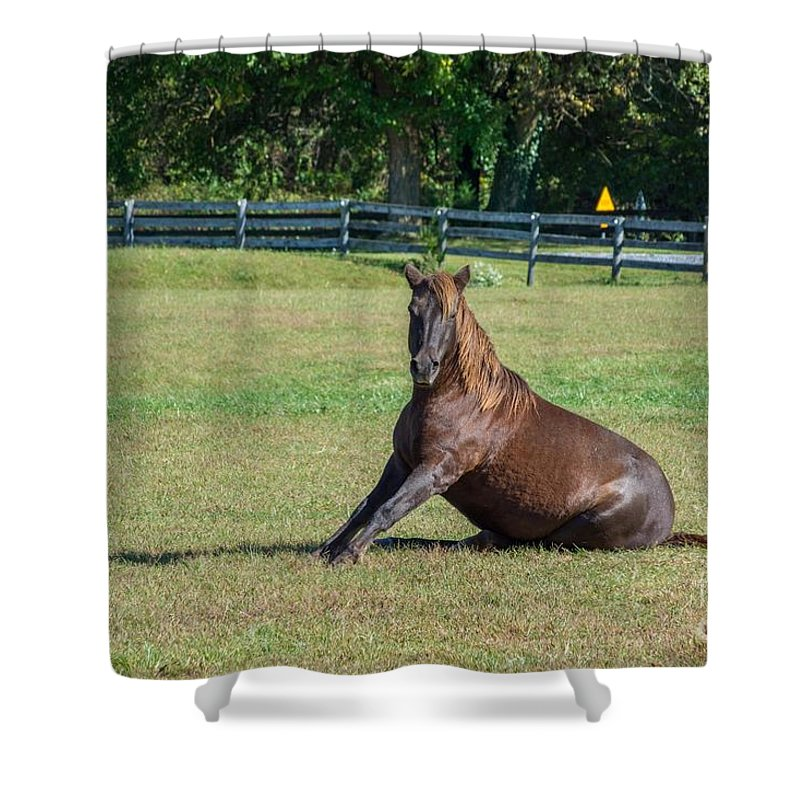 Horse Shower Curtain featuring the photograph Equestrian Beauty by Charles Kraus