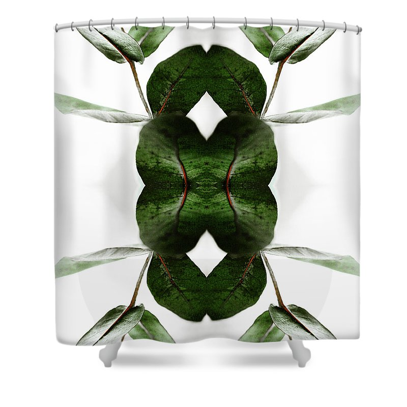 Tranquility Shower Curtain featuring the photograph Eucalyptus Leaves by Silvia Otte