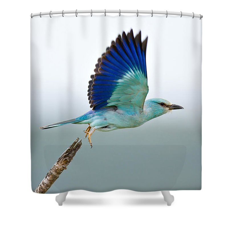 Action Shower Curtain featuring the photograph Eurasian Roller by Johan Swanepoel