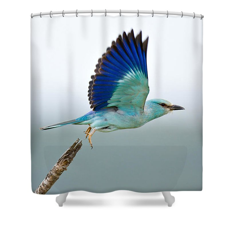 free bird shower curtains