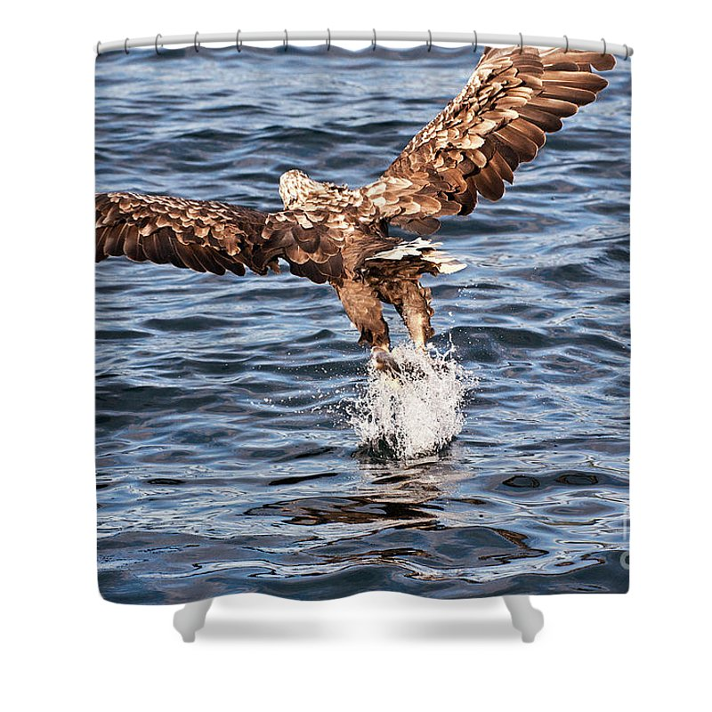 Heiko Shower Curtain featuring the photograph European Fishing Sea Eagle 2 by Heiko Koehrer-Wagner