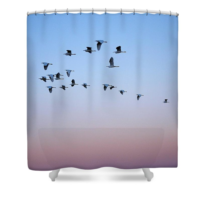 Egret Shower Curtain featuring the photograph Evening Flight by Kim Bemis