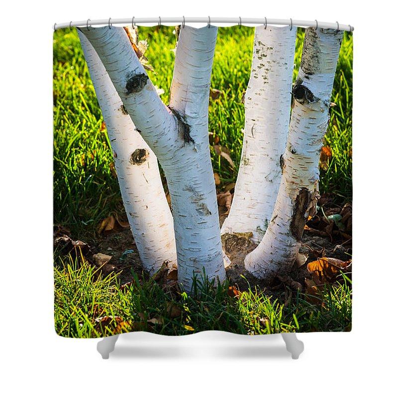 Abstract Shower Curtain featuring the photograph Evening Light by Alexander Senin