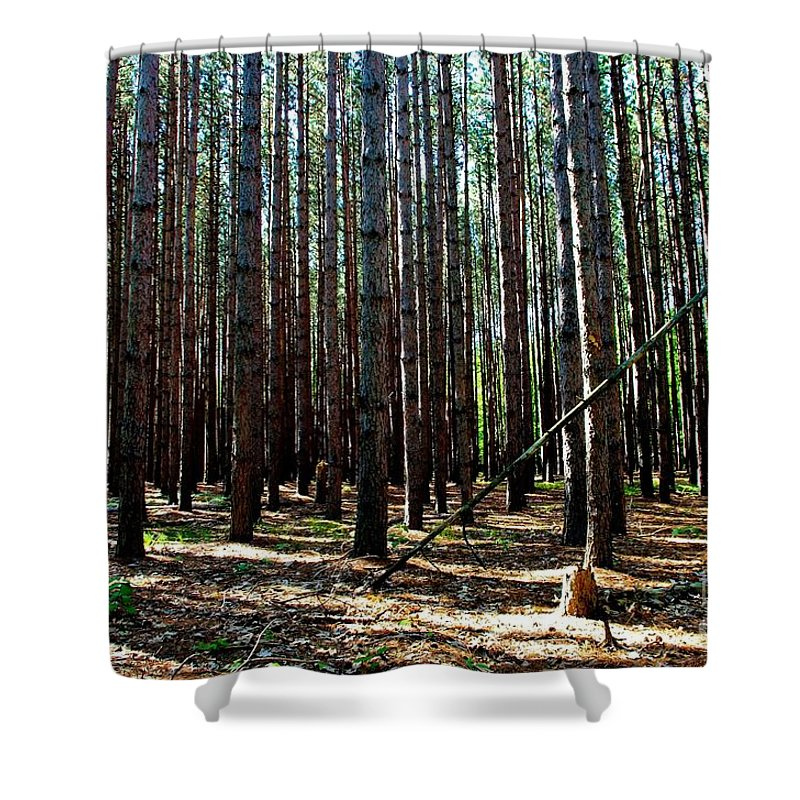 Tree Shower Curtain featuring the photograph Evergreen Forest by Patti Smith