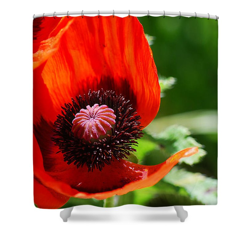 Becky Furgason Shower Curtain featuring the photograph #evolve by Becky Furgason