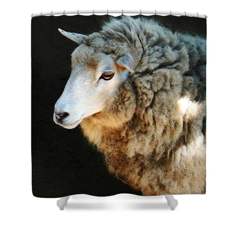 Ewe Are So Beautiful Shower Curtain featuring the photograph Ewe Are So Beautiful by Ellen Henneke