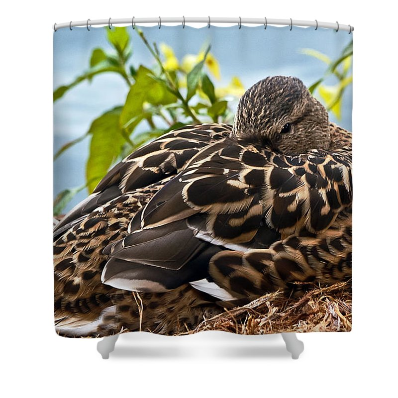Anas Platyrhynchos Shower Curtain featuring the photograph Eye Watching You by Kate Brown