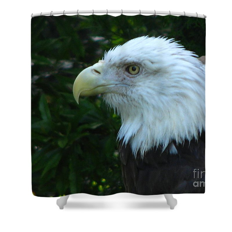 Eagle Shower Curtain featuring the photograph Eyecon by Greg Patzer