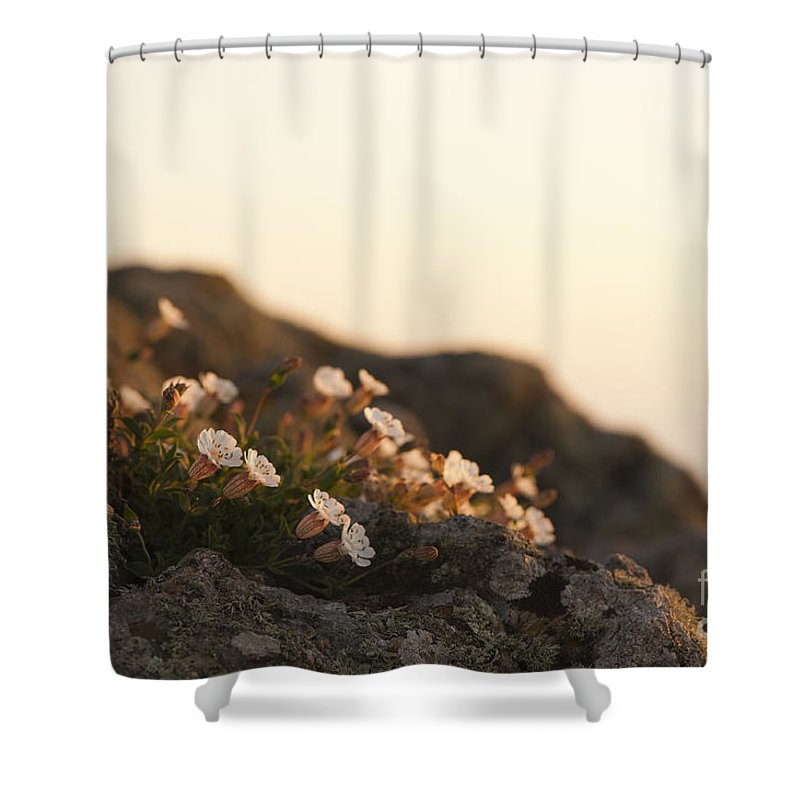 Background Shower Curtain featuring the photograph Face The Light by Anne Gilbert