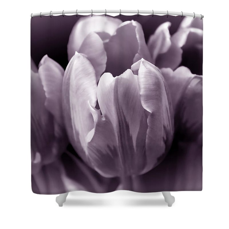 Tulip Shower Curtain Featuring The Photograph Fading Flowers Lavender Gray Monochrome By Jennie Marie Schell