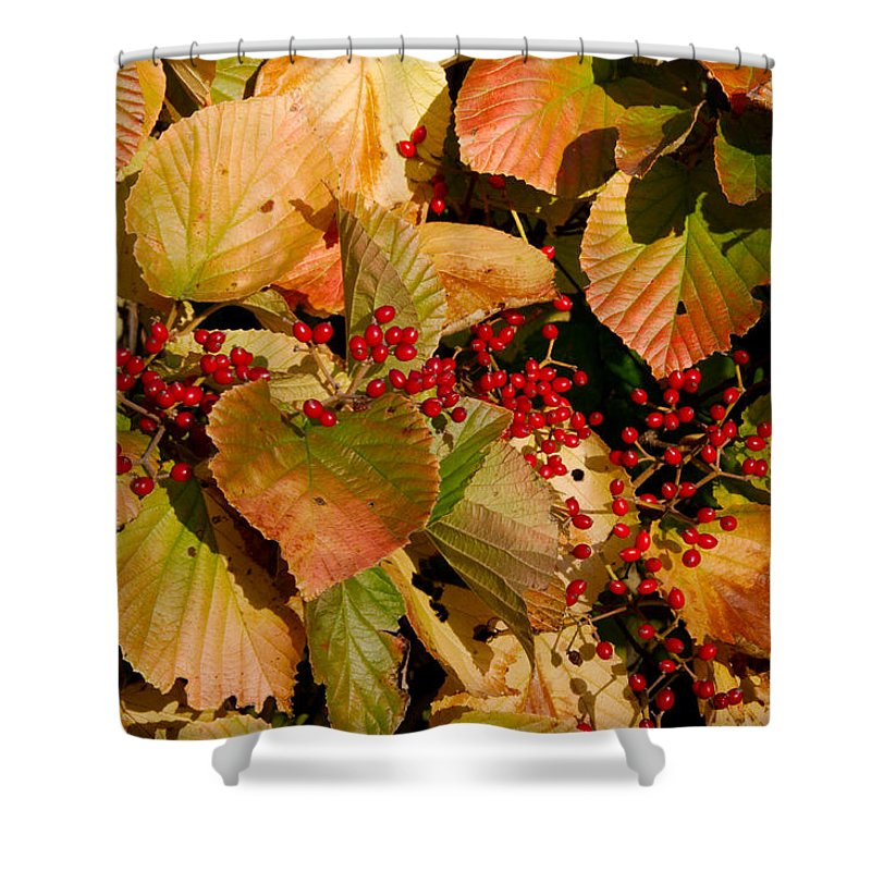 Fall Shower Curtain featuring the photograph Fall Berries by Larry Jost