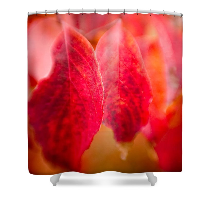 Color Shower Curtain featuring the photograph Fall Colors 0666 by Timothy Bischoff
