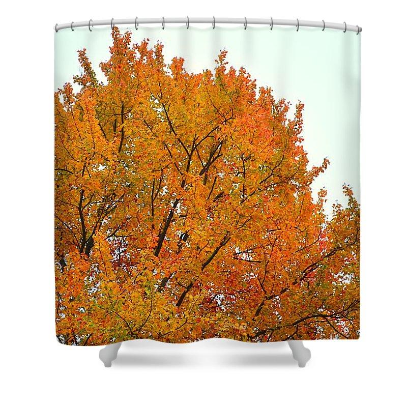 Fall Shower Curtain featuring the photograph Fall Colors 2014-11 by Srinivasan Venkatarajan