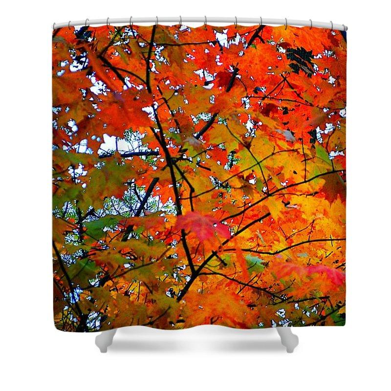 Autumn Shower Curtain featuring the photograph Fall Colors 2014-4 by Srinivasan Venkatarajan