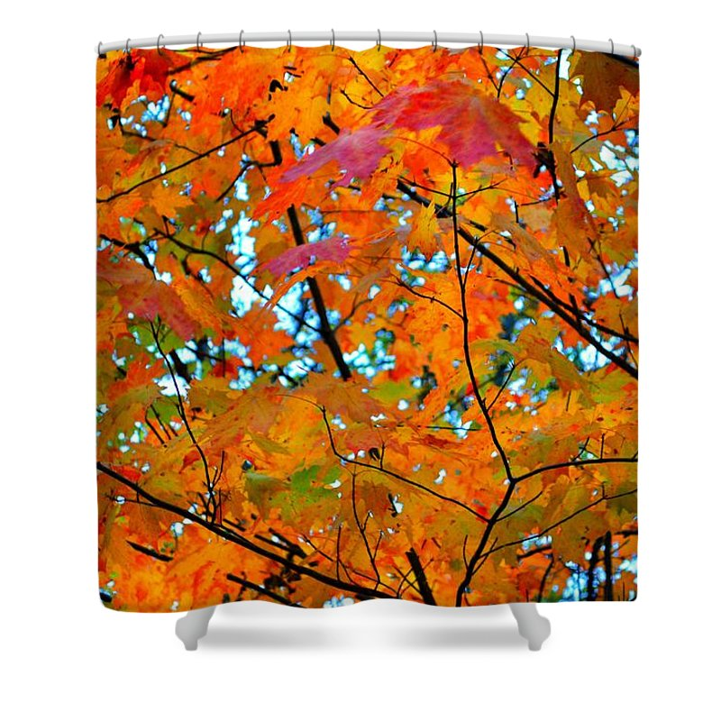 Autumn Shower Curtain featuring the photograph Fall Colors 2014-5 by Srinivasan Venkatarajan