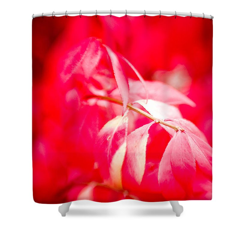 Color Shower Curtain featuring the photograph Fall Colors 6669 by Timothy Bischoff