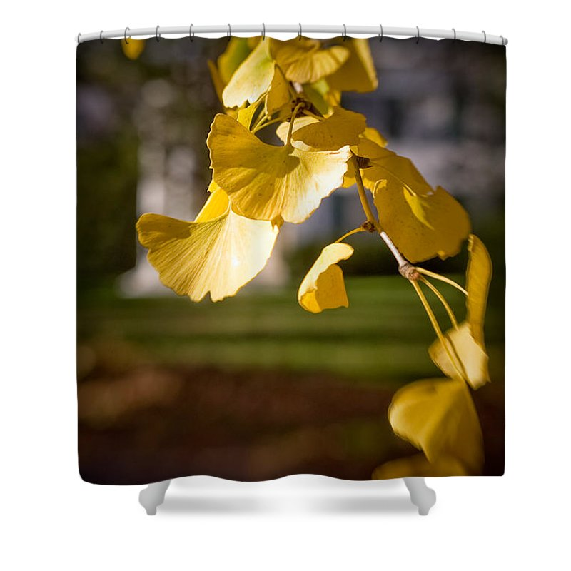 Color Shower Curtain featuring the photograph Fall Colors 6737 by Timothy Bischoff