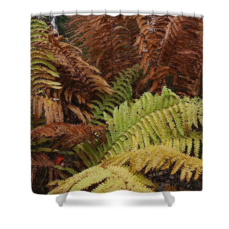 Fall Shower Curtain featuring the photograph Fall Ferns Acadia National Park Img 6355 by Greg Kluempers