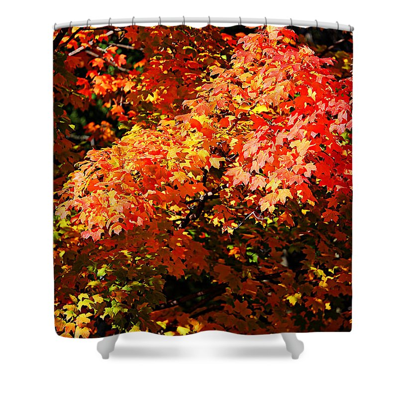 Autumn Shower Curtain featuring the photograph Fall Foliage Colors 21 by Metro DC Photography